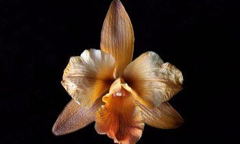 3 dicas de como cuidar das orquídeas após a floração