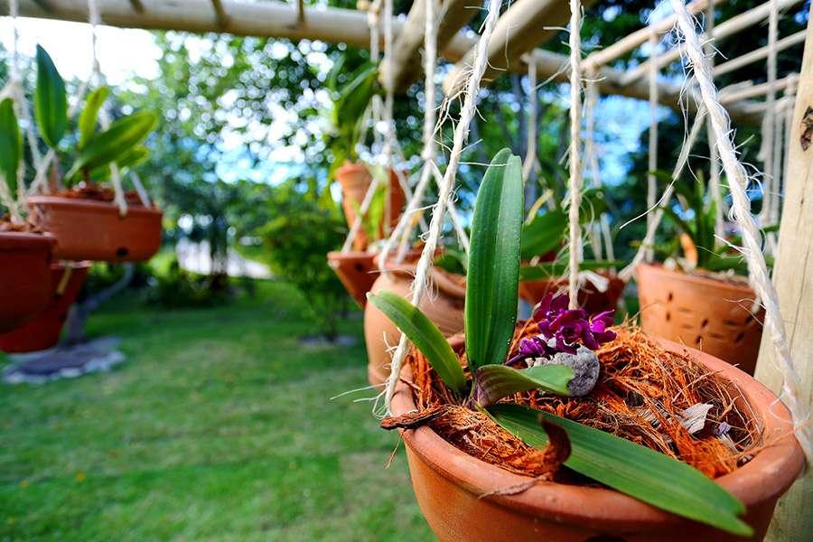 como fazer a orquídea florir