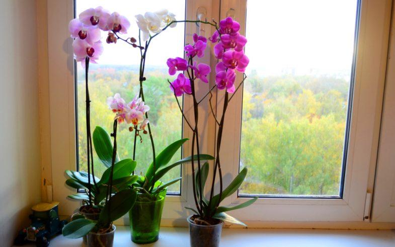 Como fazer sua orquídea florir