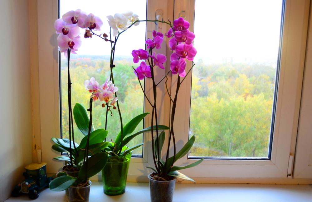 como fazer orquídea florir - nutrientes e luminosidade