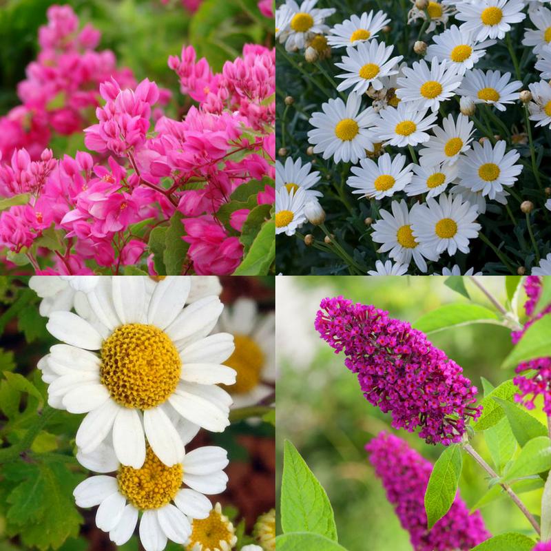 plantar em cada estação do ano - verão