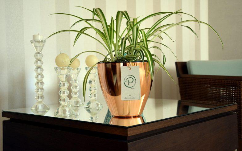 Lançamento: Vaso Autoirrigável Plantiê