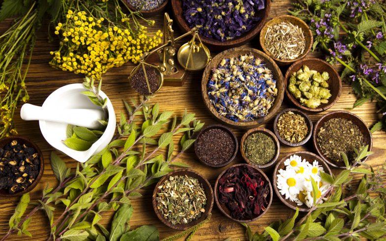 21 plantas medicinais para ter em sua casa