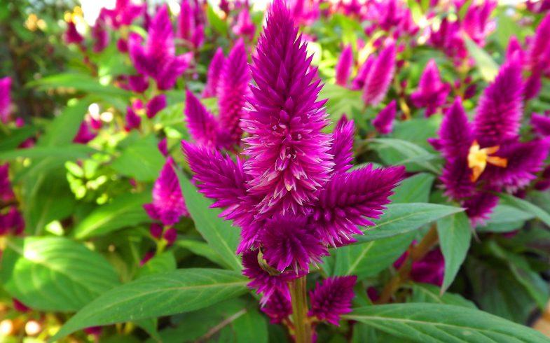 Plantas ornamentais não tóxicas para ter em casa tranquilamente