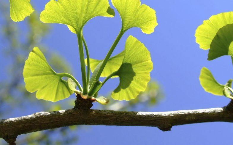 4 plantas que protegem seu cérebro de Alzheimer, depressão, ansiedade e outros problemas