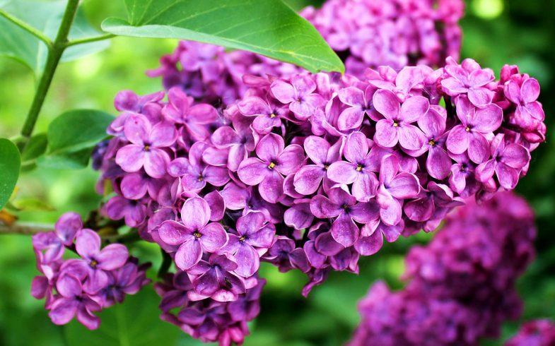 5 plantas para quem não leva jeito para a jardinagem