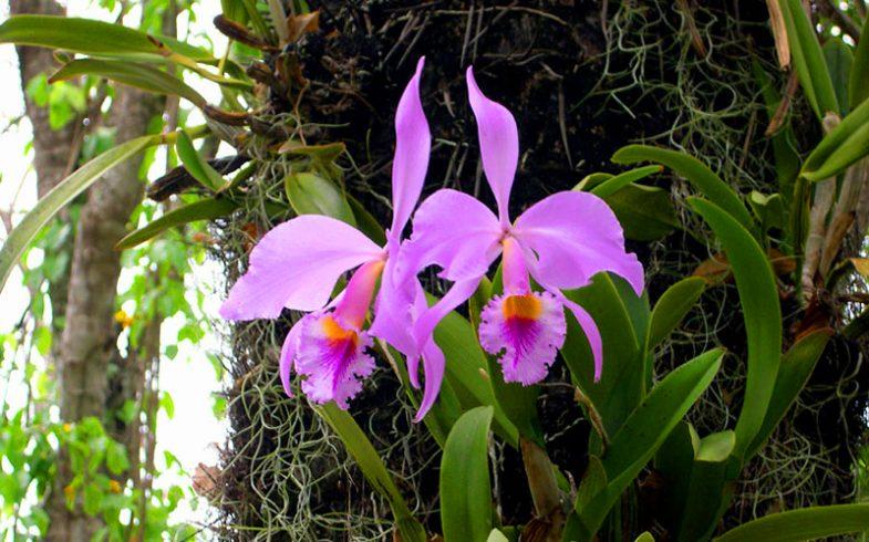 Informações sobre orquídeas para iniciantes