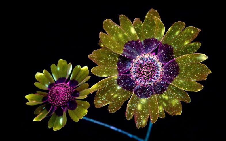 Fotógrafo consegue capturar a luz invisível das flores