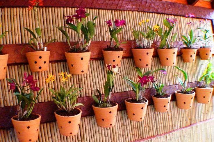 O que você precisa saber para nunca mais perder plantas