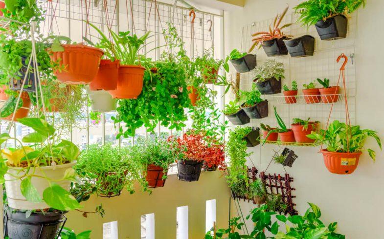 Como reconhecer se suas plantas estão com falta de sol