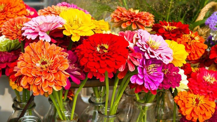 8 flores para cultivar durante o verão