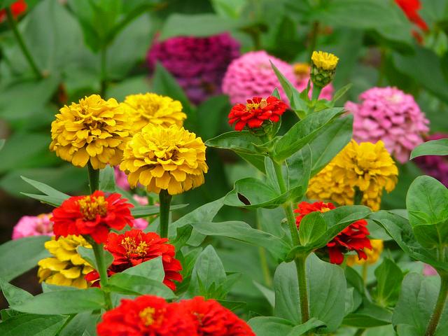 Flores que suportam bem o verão