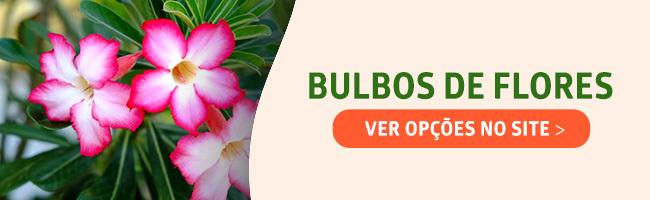 comprar bulbos de flores
