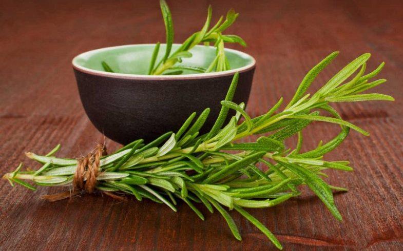 Benefícios e propriedades do alecrim