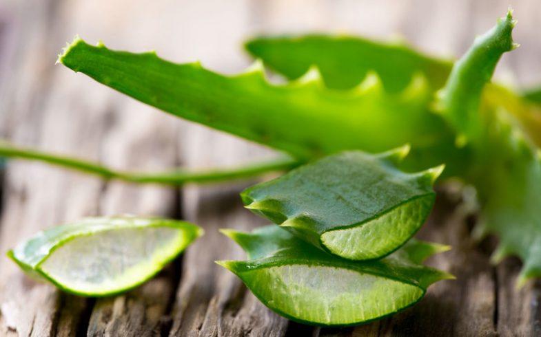 Benefícios e propriedades da Babosa ou Aloe Vera