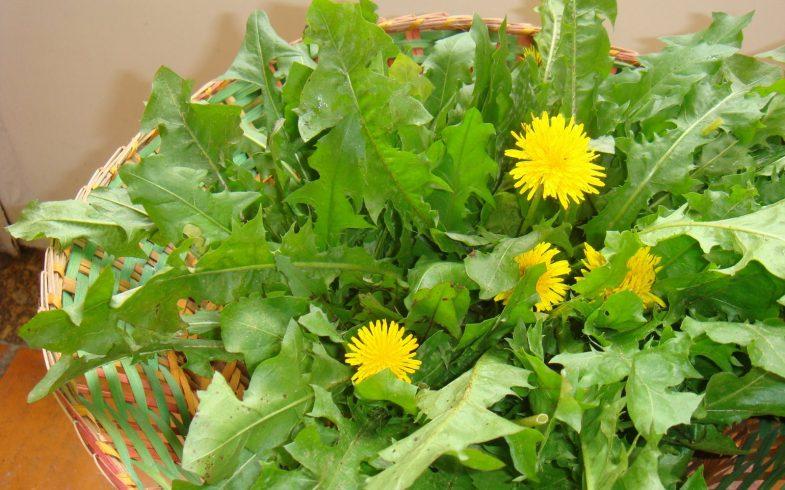Conhecendo um pouco mais sobre PANC's – As Plantas Alimentícias Não Convencionais