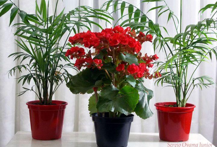 Dicas de plantas fáceis de cuidar