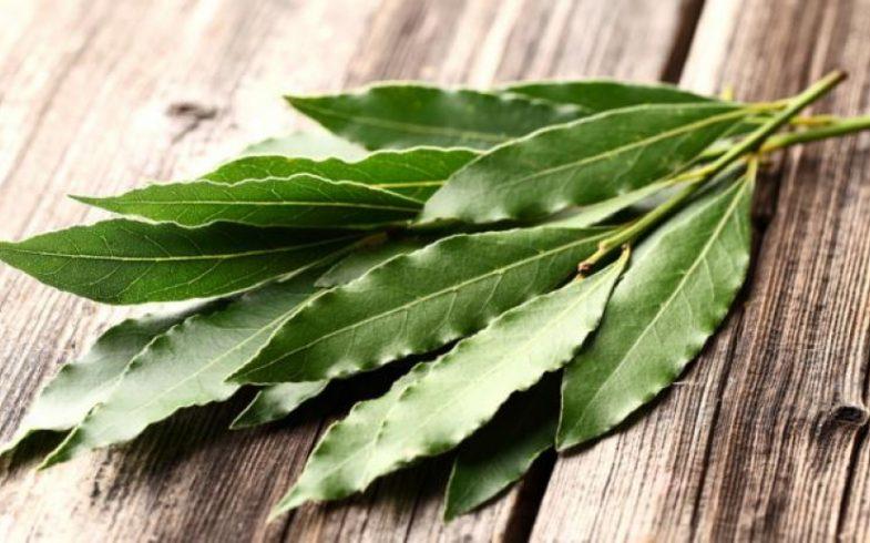 Benefícios e propriedades do eucalipto