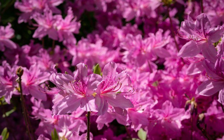 Flores de inverno: 07 espécies resistentes ao frio para você cultivar