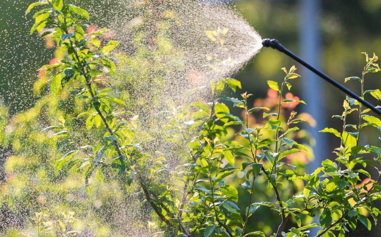 Saiba tudo sobre o poderoso fertilizante orgânico Ferti-Peixe