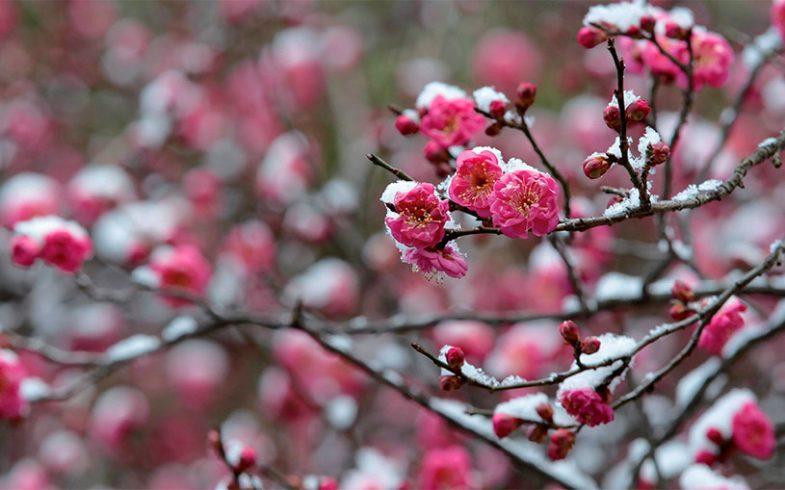 15 erros para evitar no jardim durante o inverno