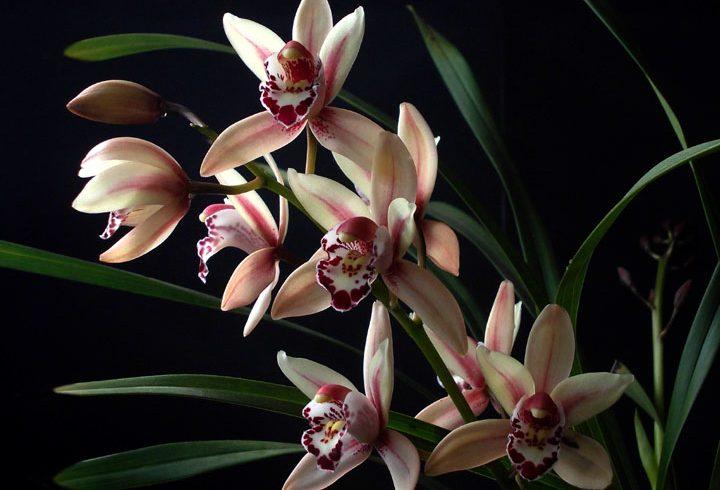 Cuidados com as Orquídeas no Inverno