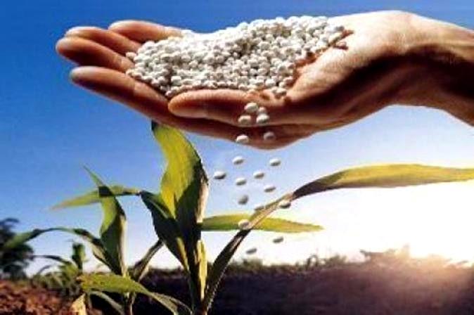 O que é uréia e como utilizá-la nas plantas?