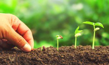 Como plantar sementes
