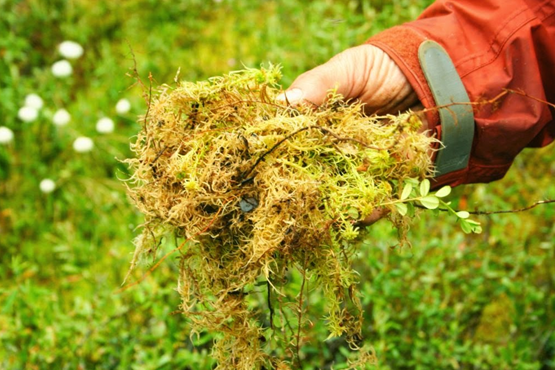 O que é musgo e como usá-lo nas plantas?