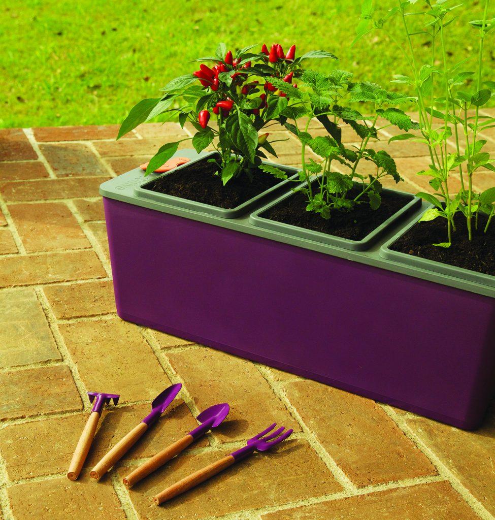 plantar hortaliças em casa