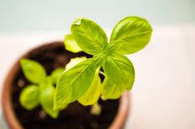 #MãosNaTerra: Veja como cultivar em casa