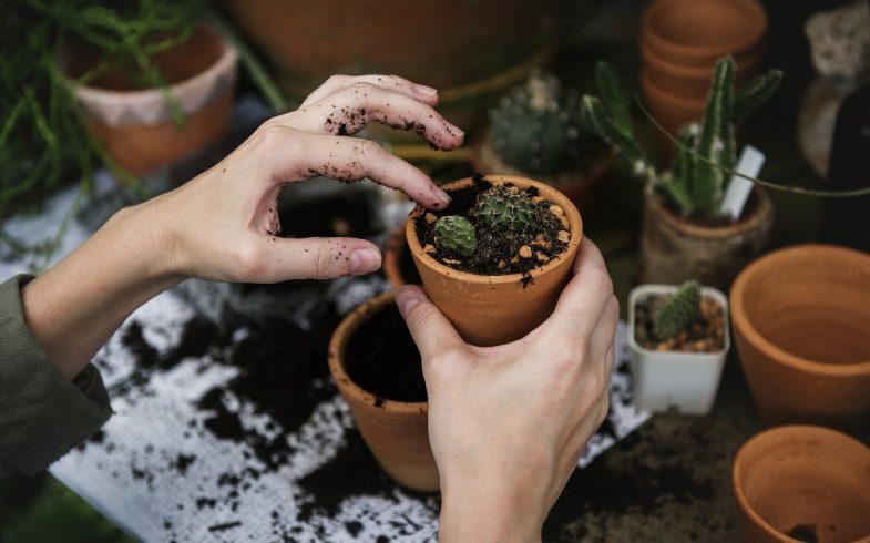 Jardins e hortas: começo de uma maior conexão com a natureza