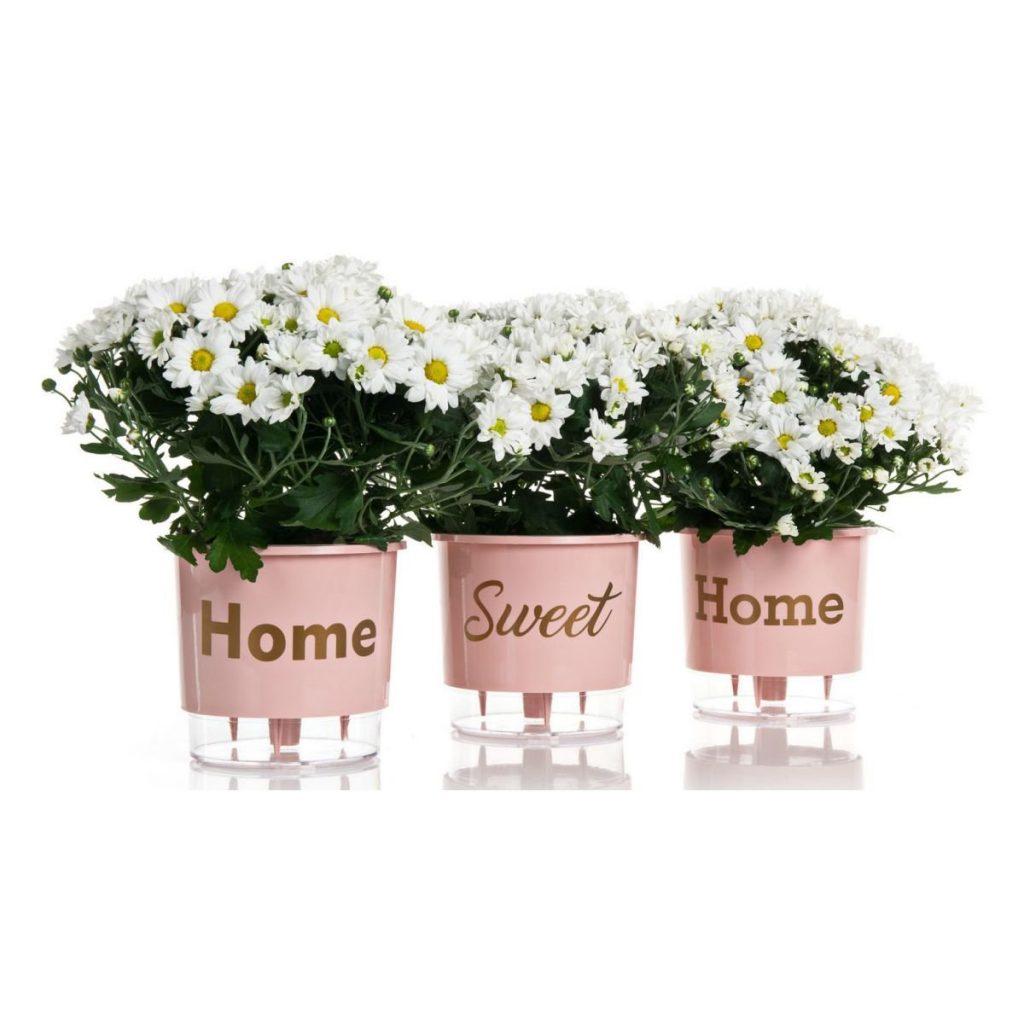 """Kit com três vasos autoirrigáveis com a inscrição """"Home Sweet Home"""""""