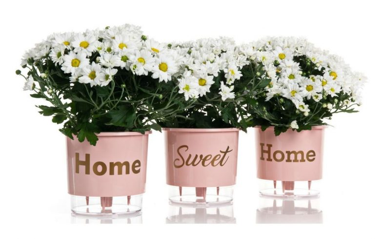 Dica para presentear, vasos autoirrigáveis combinam praticidade e beleza