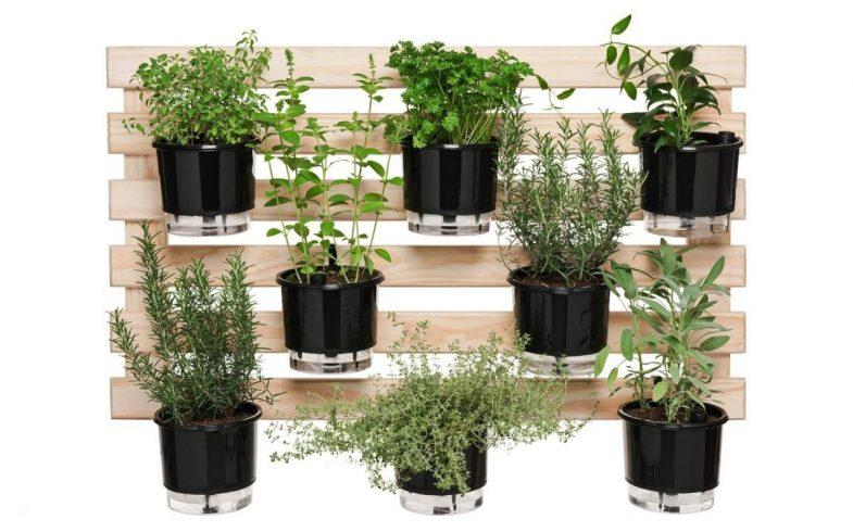Conheça sete produtos para você otimizar espaço com o cultivo de plantas