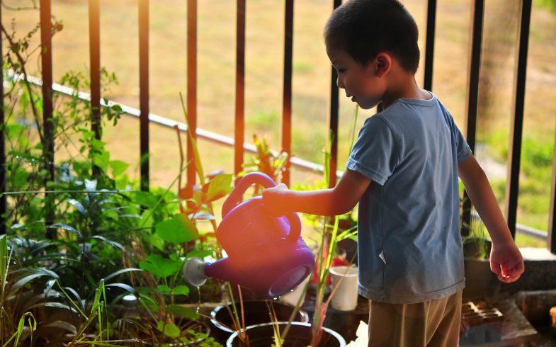 A participação das crianças no cultivo de plantas como processo educativo