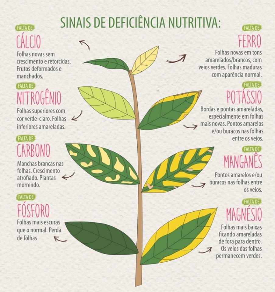 Arte exemplificando sinais de deficiência nutritiva nas plantas Por exemplo, folhas novas sem crescimento e retorcidas, bem como frutos deformados e manchados podem ser sinal da falta de cálcio