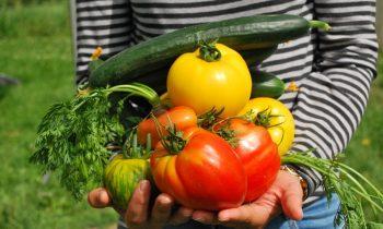 Por que as hortas domésticas estão retomando sua importância