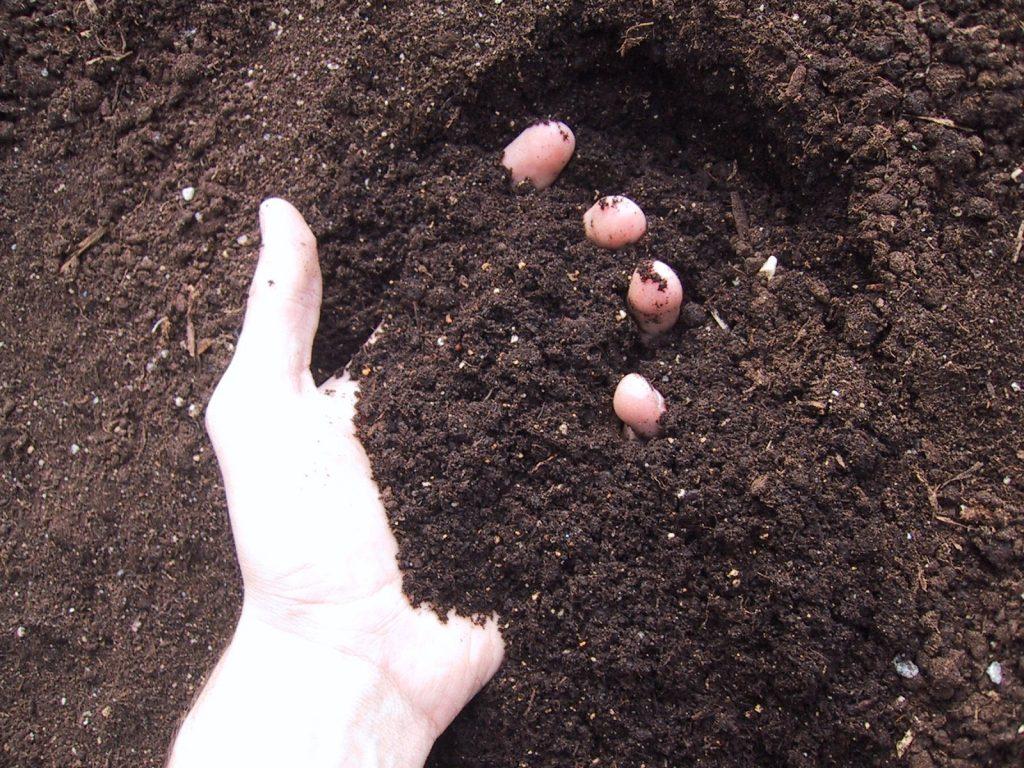 Pessoa com a mão em terra aparentemente propícia para o cultivo de hortaliças
