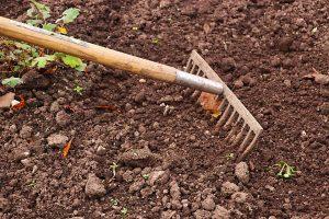 Terra sendo preparada para o cultivo  por meio de um ancinho