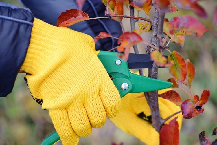 como cuidar das plantas no outono