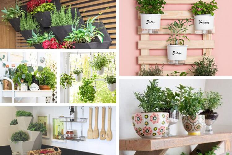 planta na cozinha