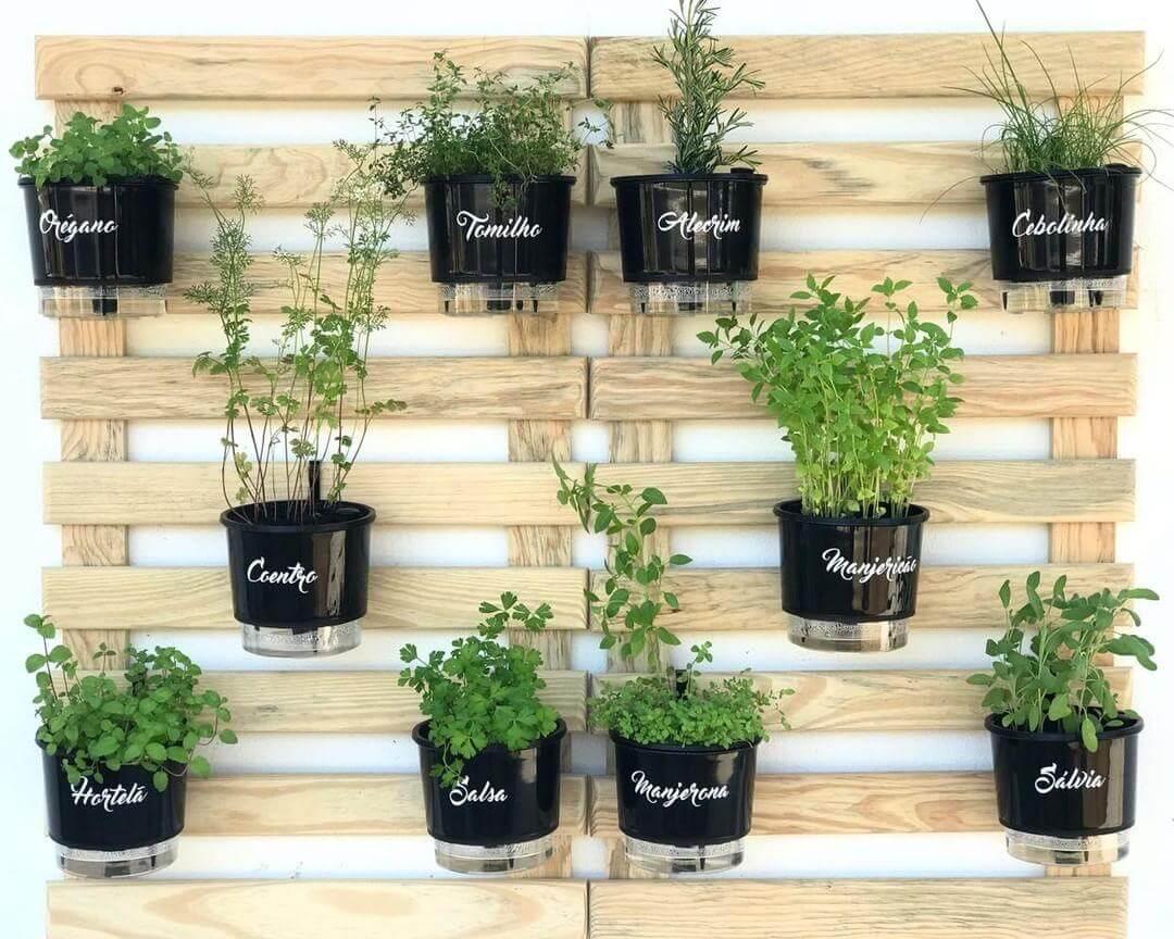 como plantar pimenta biquinho