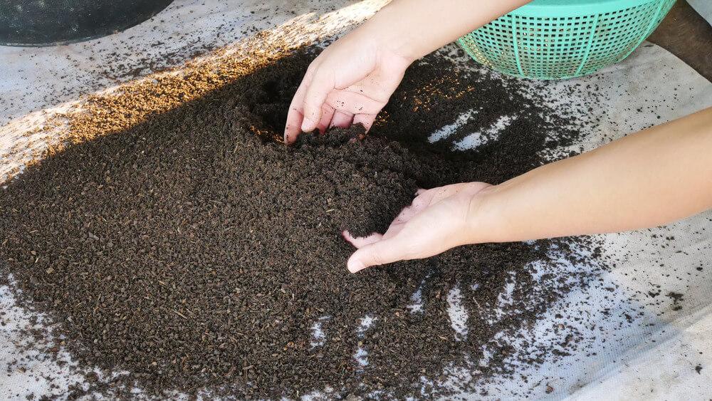 como adubar plantas