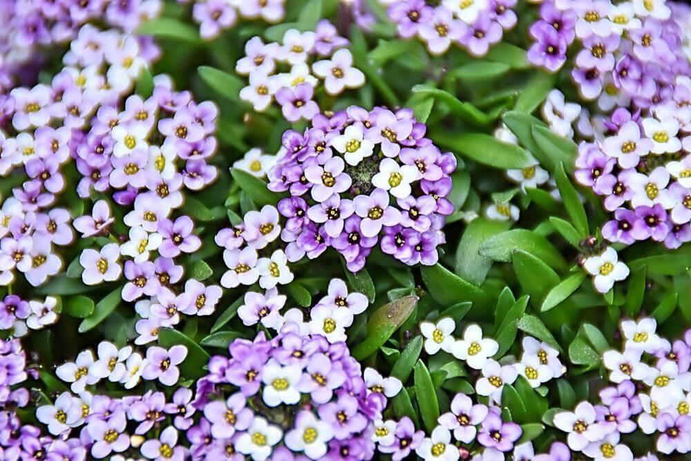 plantas que perfumam